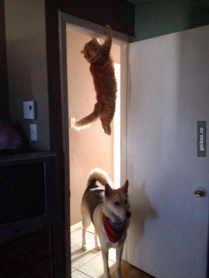 Ninja Seviyesi : Kedi