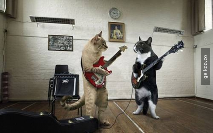 Kedi the band