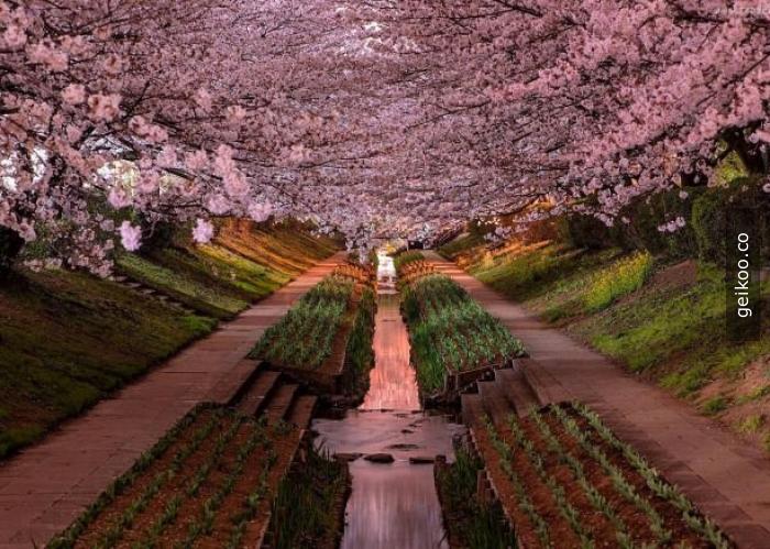Yokohoma - Japonya
