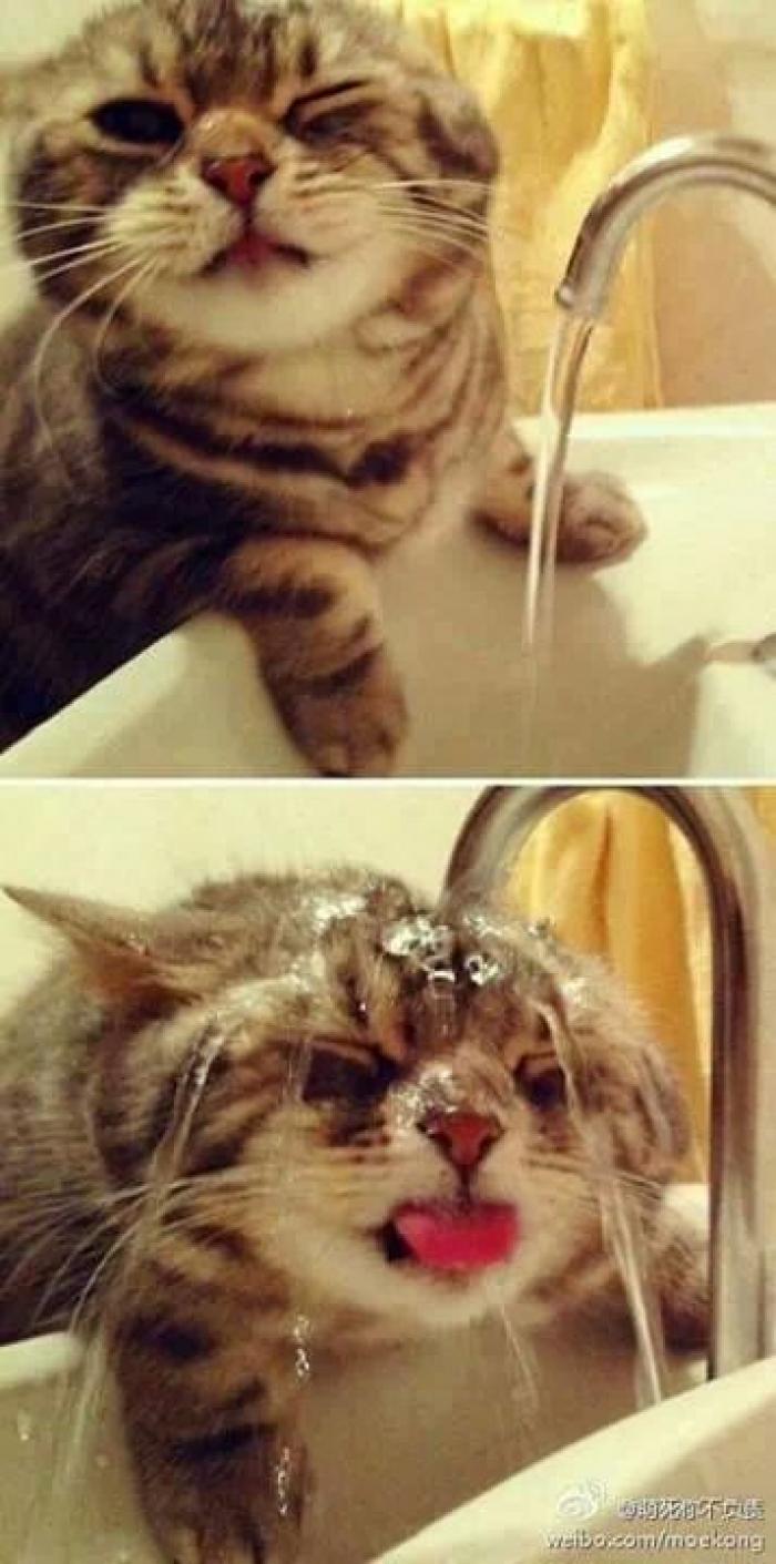 su seven kedi