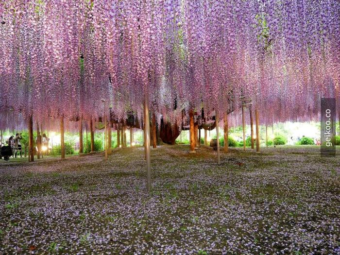 Rüya ülke - Japonya