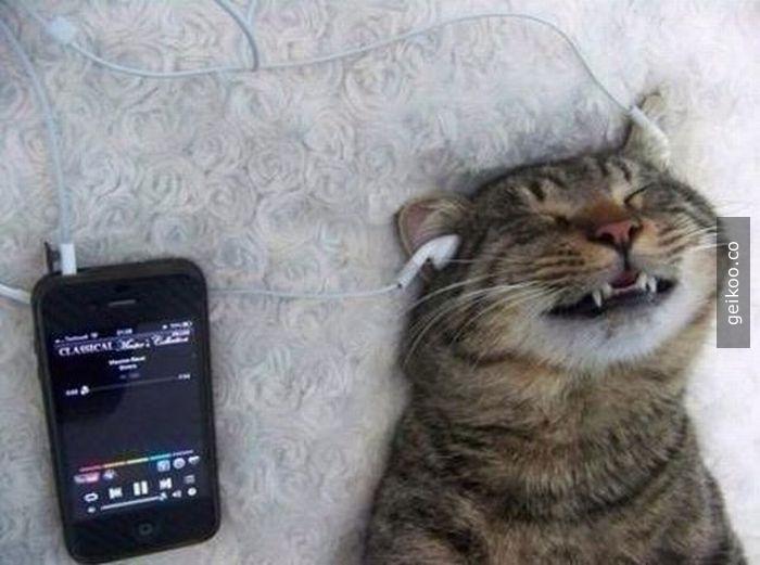 Kedinin müzik ile imtihanı