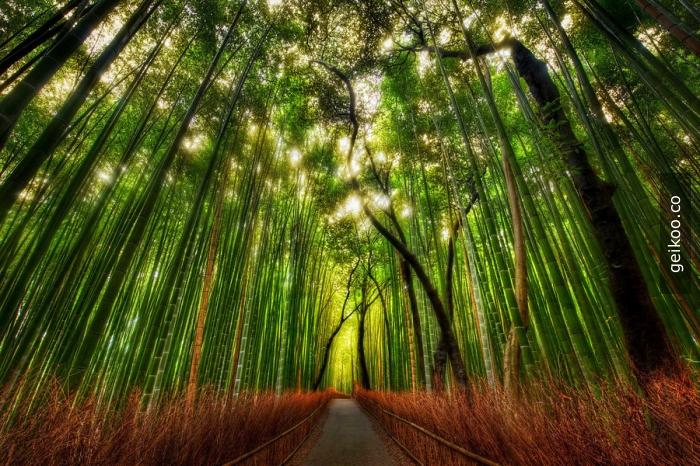 bir başka Japonya - Kyoto bambu ormanı