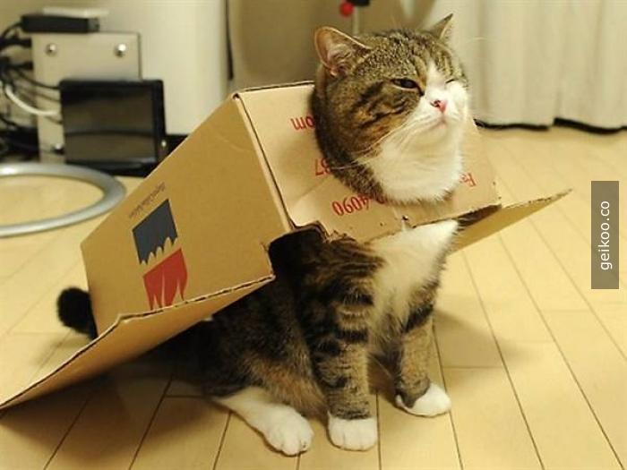 sığabiliyorsam, girebilirim (kedi mantığı)