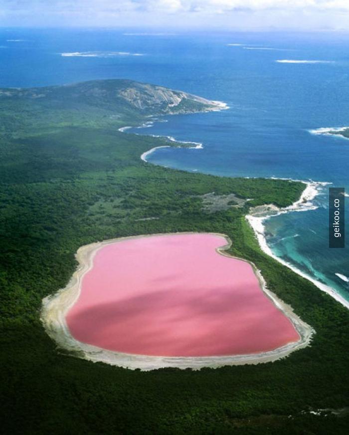 Ülkede bulunan her canlı seni öldürmek istese bile Avusturalya güzel memleket