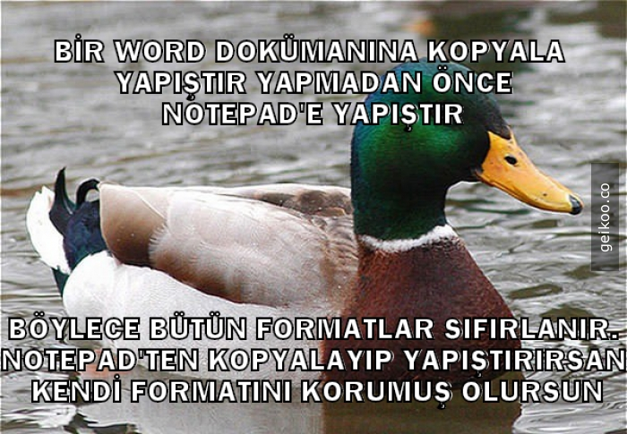 Word Tavsiyesi