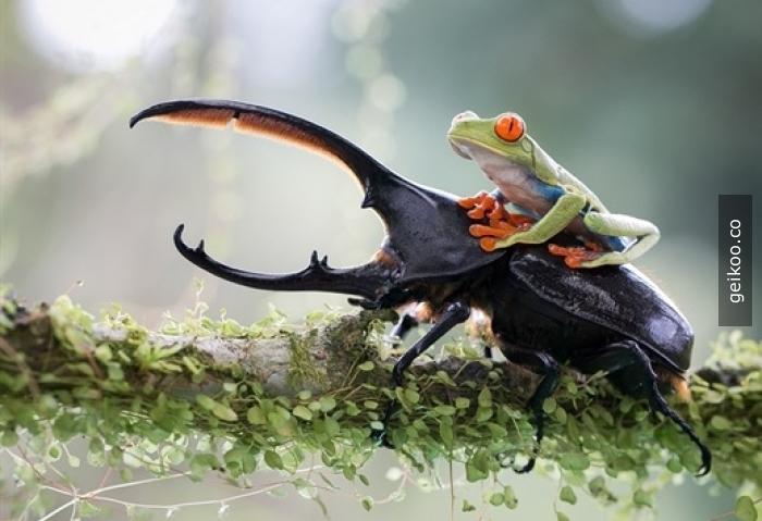 Çabuk önde giden böceği takip et, açıklama için vakit yok :P