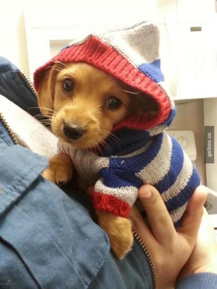 Kış geldi malum sıkı giyiniyor herkes