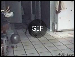 Su balonu taşıyan kedi