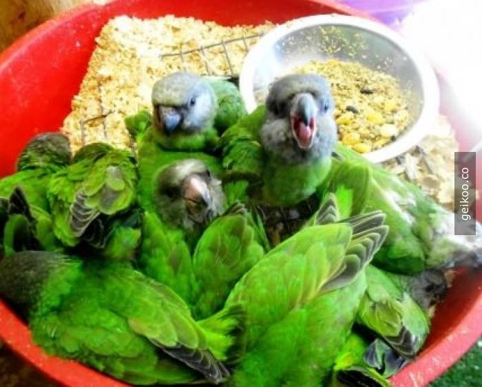 İlk bakışta salata zannettim