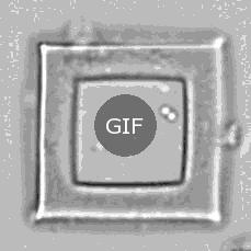 Hızlı çekim bakteri üremesi (24 saat)