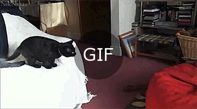 Kedinin zamanlama hatası