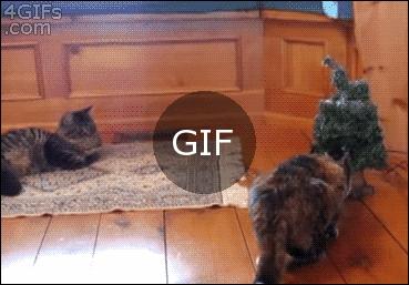 Orjinal kedi tepkisi :)