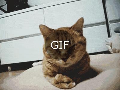 Kediler rahatına düşkündür