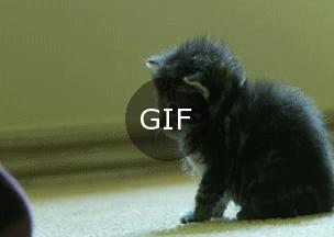 Kedi yavrularının çok gizli kapatma düğmesi