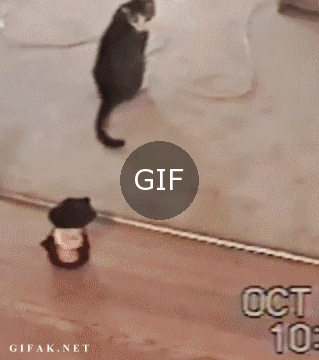 Gaza gelen kedi