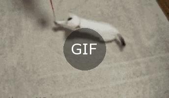 Acayip kedilerin bi acayip dünyası