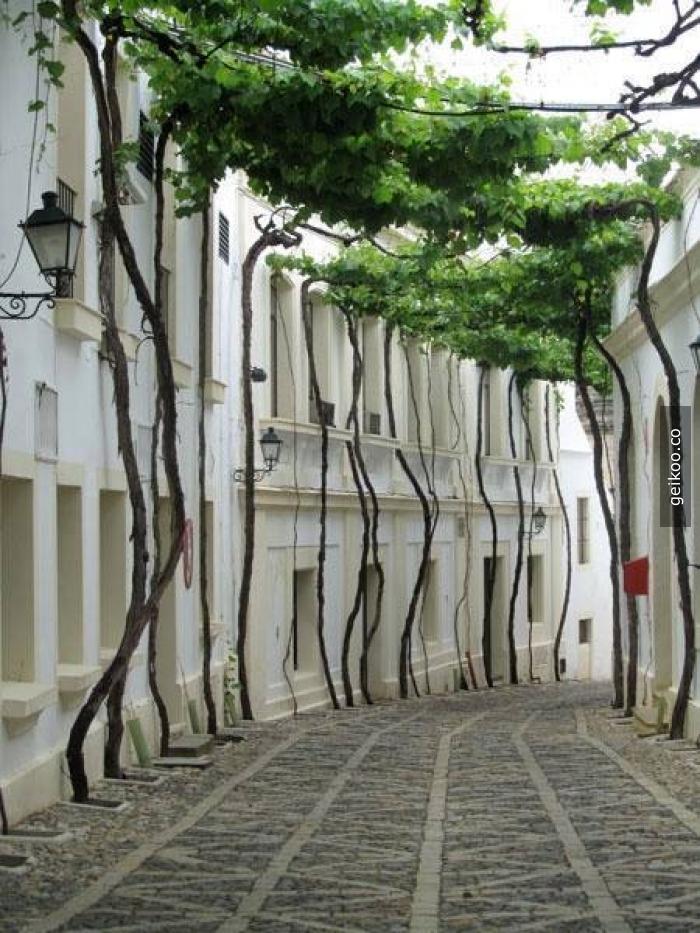 Jerez Sokağı, İspanya