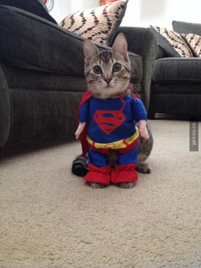 Süper kedi