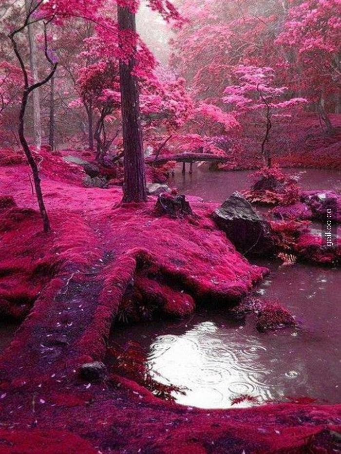 Kyoto Ormanları - Japonya