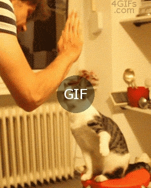 Çak kedi