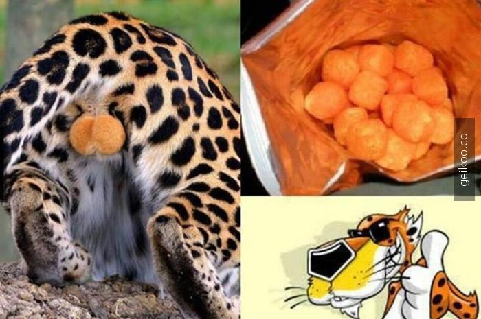 Bunu gördükten sonra cheetos yemiyorum