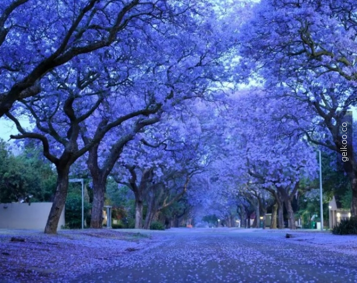 Pretoria, Güney Afrika