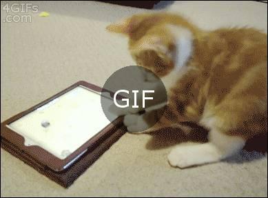 Kedi bize bişey anlatmaya çalışıyor galiba