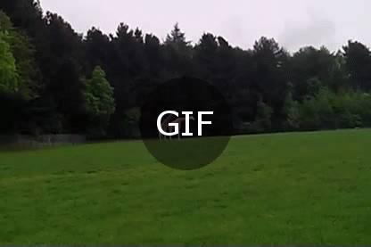 zürafa belgeseli (kısa)