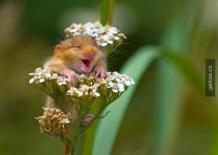 Gördüğüm en mutlu tarla faresi