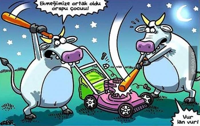 kızgın inekler