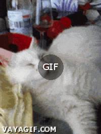 kedi uyandırma servisi