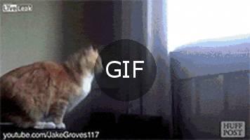 Zıplama fonksiyonu bozulmuş kediler