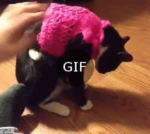 süveter ve kedi ilişkisi