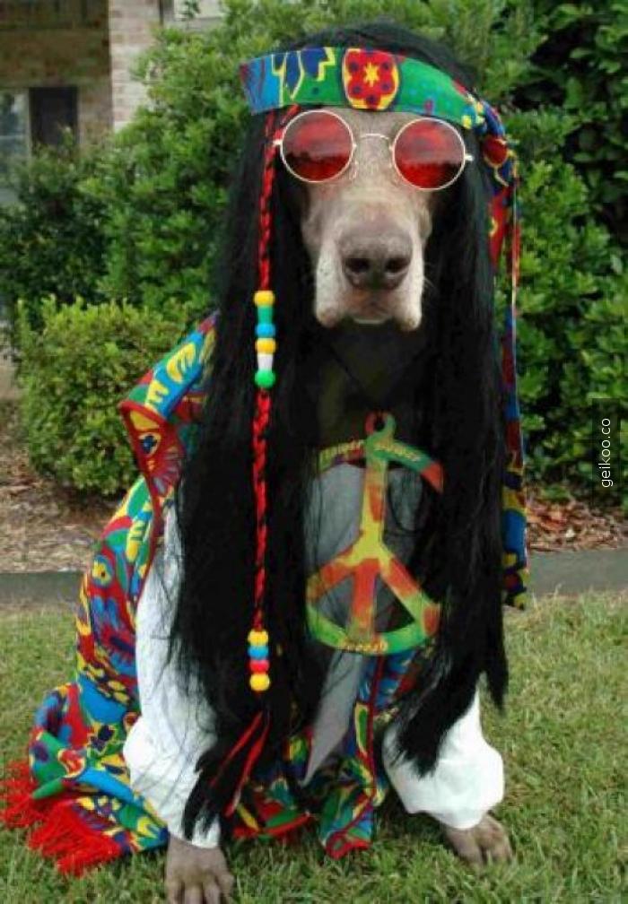 hippi köpek