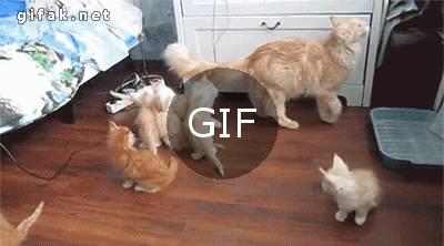 anne kedi düşünce yavruların tepkisi
