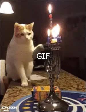 mumu söndürmeye çalışan kedi