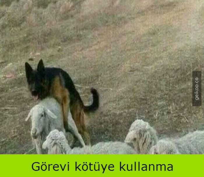 kurt-kuzu