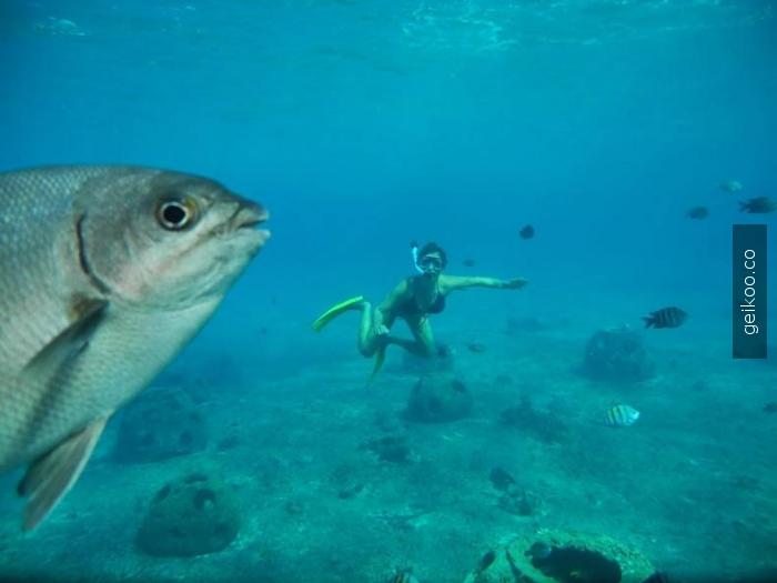 fotobomb seviye: balık