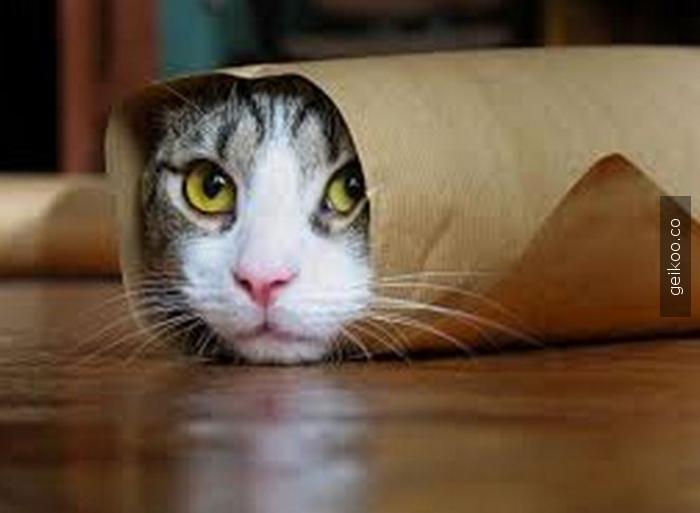 dürüm kedi