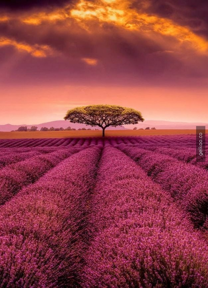 ağaç olmak