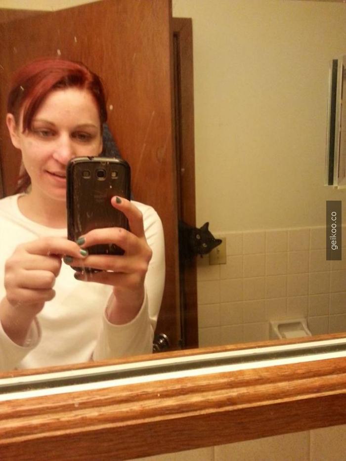 fotobomb seviye: kedi