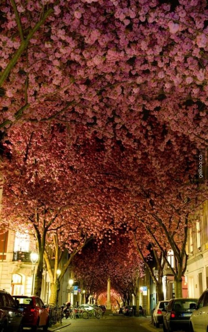 Almanya'nın Bonn şehrinden bir sokak görüntüsü