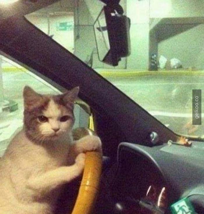 Kısa mesafe isteyince taksici