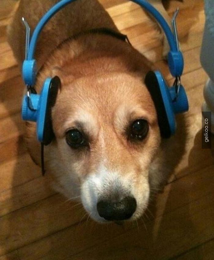 bana havhavlı müzik açarmısın?
