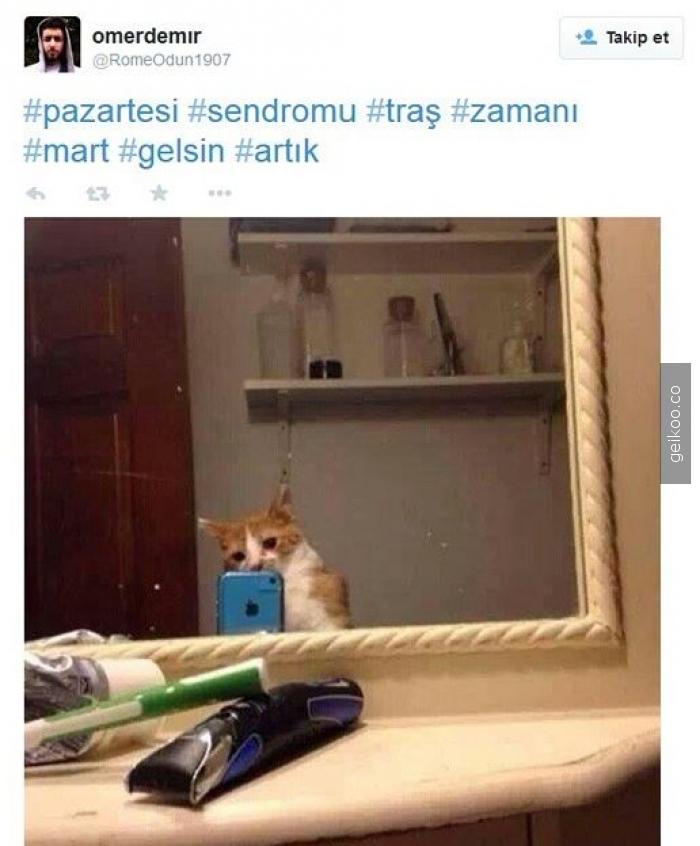 Kedi tweeti